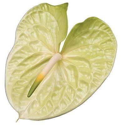 Lemona®